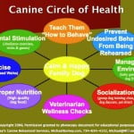 holistic dog health, calm dog, dog health, family dog