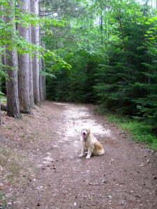 Michigan Dog Training, remote collar, shock collar, e-collar, dog hikes