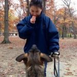 Michigan Dog Training, Plymouth, Michigan, dog trainer