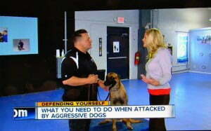 Michael Burkey, Ann Marie LaFamme, dog training, aggressive dogs