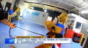 Ann Marie LaFamme, Channel 7 News Reporter, Michael Burkey, Michigan Dog Training, aggressive dogs