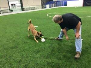 Michigan Dog Training, Randy Hare, Scent detection training