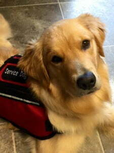Michigan Dog Training, Service Dog, PTSD Alert Dog, PTSD, Plymouth