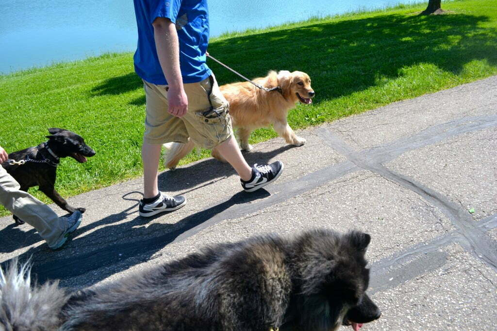 Dog walks, dog hikes, dog socialization, Michigan Dog Training, Plymouth, Michigan