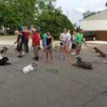 Michigan Dog Training, Plymouth, Michigan, group dog training class, dog obedience, dog training