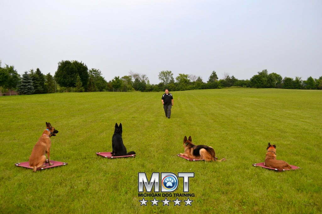 Michigan Dog Training, Michael Burkey, Plymouth, Michigan