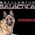German Shepherd, Michigan Dog Training, Plymouth, Michael Burkey, Starbuck