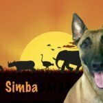 Belgian Malinois, Michigan Dog Training, Michael Burkey, Plymouth, Michigan