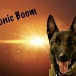 Michigan Dog Training, Belgian Malinois, Michael Burkey, dog rescue, dog adoption, Lenawee County Animal Shelter, Plymouth, Michigan