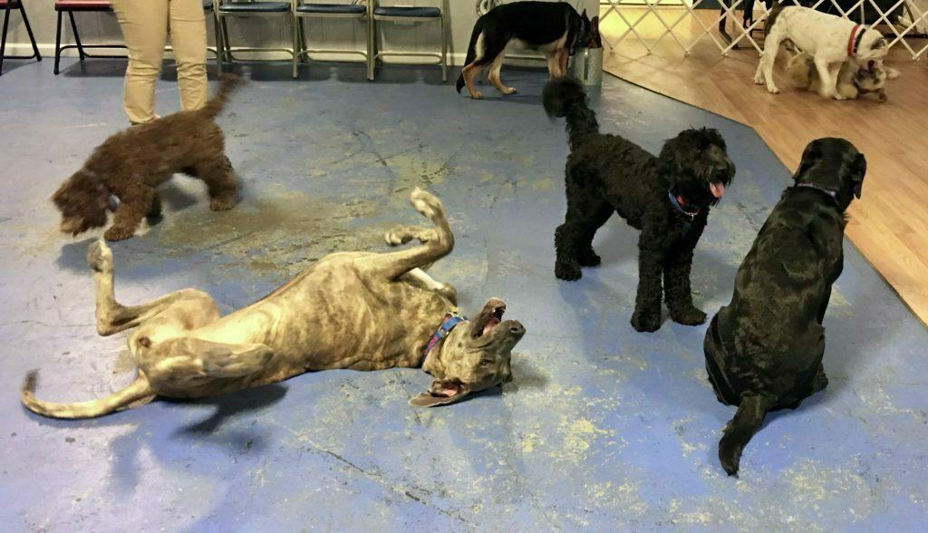 Michigan Dog Training, Dog Daycare, Doggie DayCare, Plymouth, Michigan