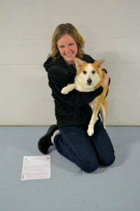 Michigan Dog Training, AKC, CGCA, Plymouth, Michigan