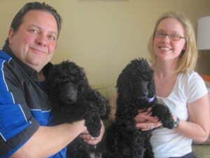Diabetic Alert Dog, Standard Poodle, MIchigan Dog Training