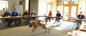 Michigan Dog Training, dog obedience