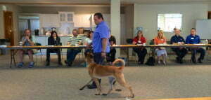 Michigan Dog Training, dog obedience