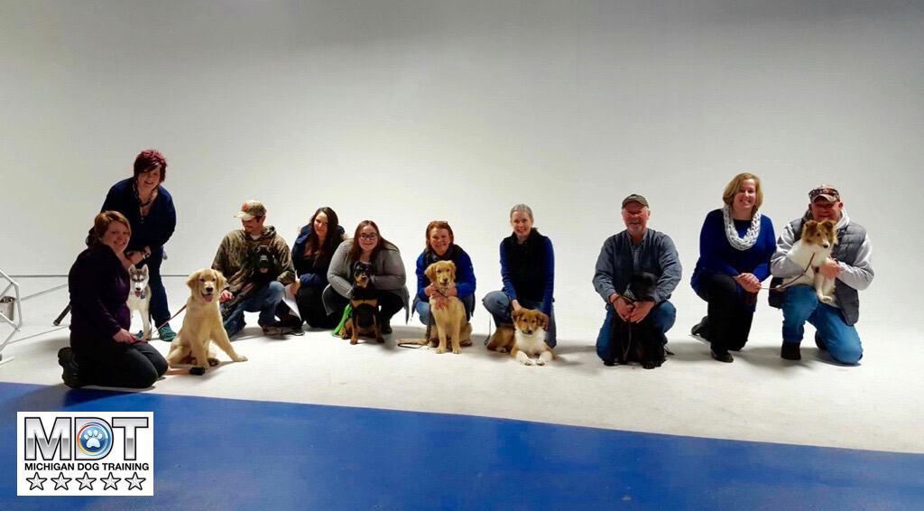 Dog Agility Training Michigan