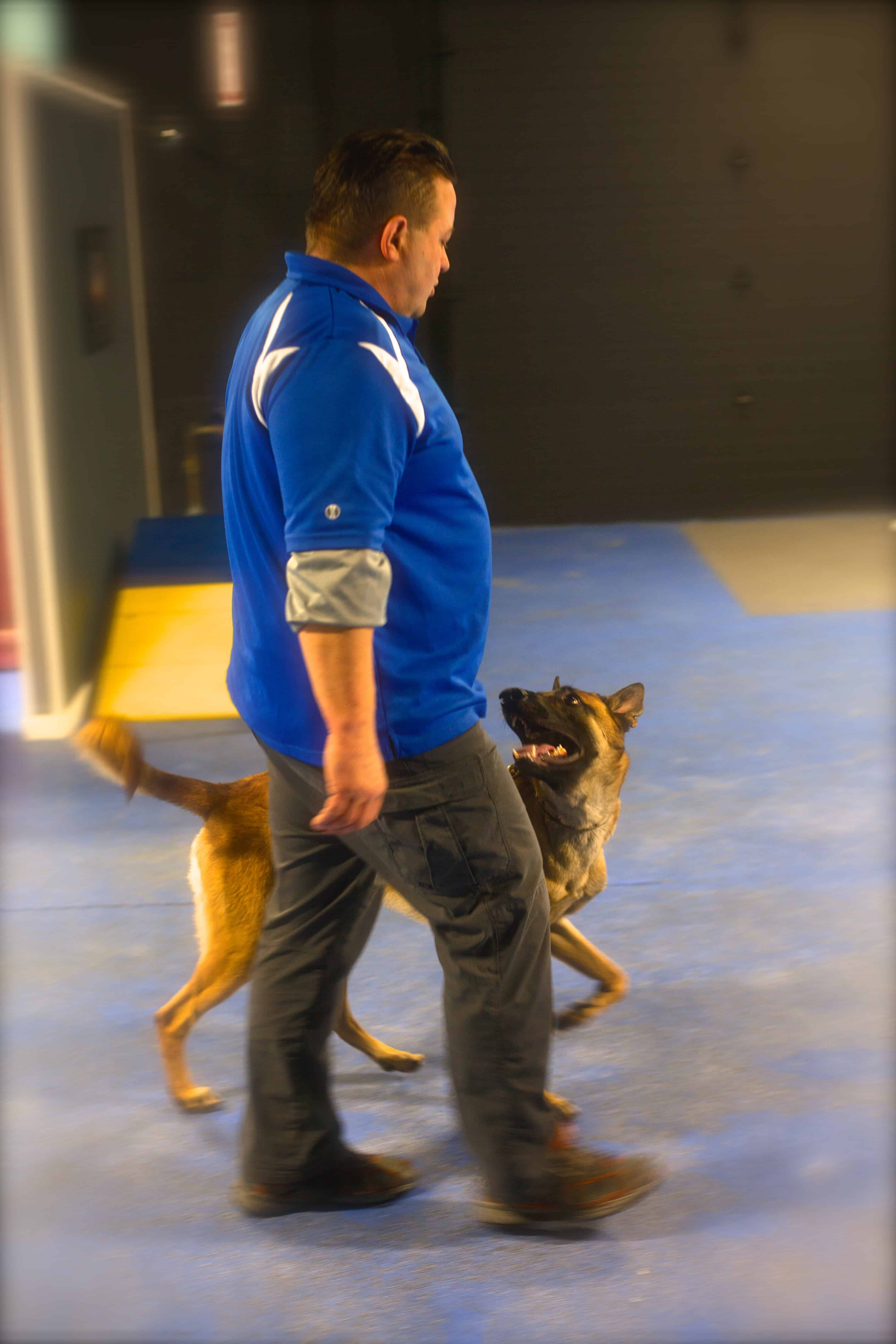 Dog Obedience Training Classes In Michigan