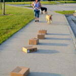 Michigan dog training, nosework