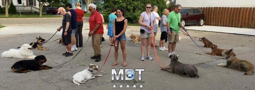 Michigan Dog Training, Advanced dog obedience, Plymouth, Michigan, E-Collar training, dog training
