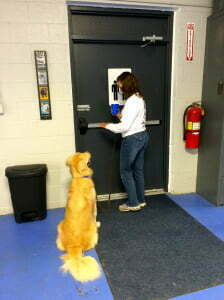 Advanced Canine Good Citizen, Michigan Dog Training