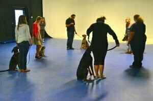 basic dog training class, Michigan Dog Training