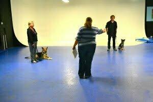 MIchigan Dog training, Plymouth, Michigan, CGC, Canine Good Citizen, dog training, dog class