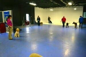 Michigan Dog Training, Plymouth, Michigan