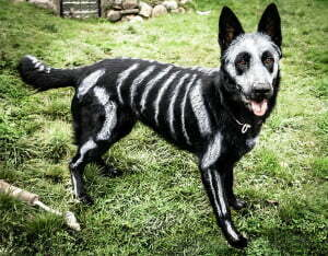 Michigan Dog Training, Michael Burkey, Halloween, Dog