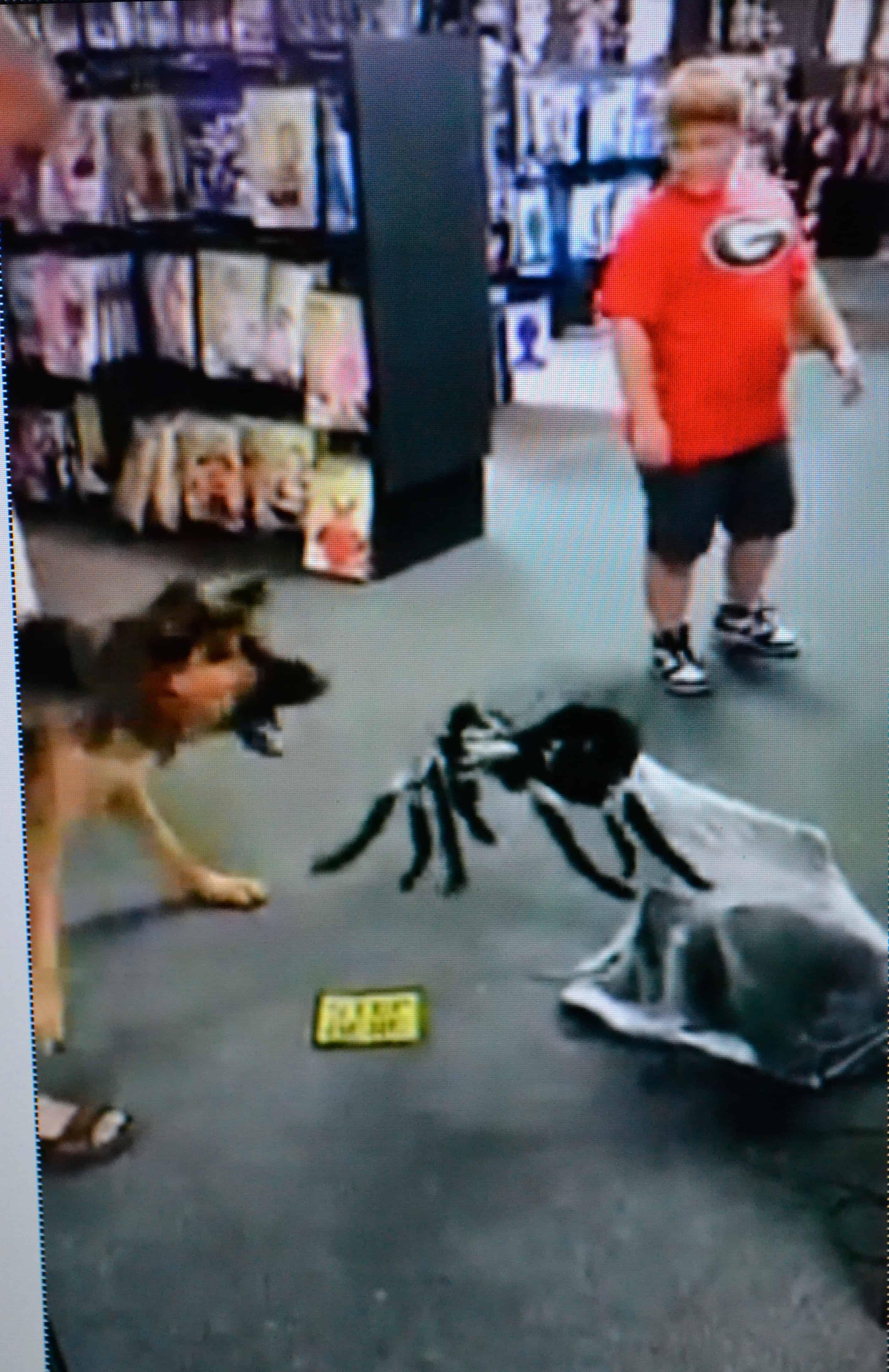Train a fearful or aggressive dog | Michigan Dog Training