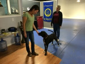Michigan Dog Training, meeting a dog, Plymouth, Michigan