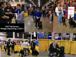 Michigan Dog Training, Service Dog, Service Dog in Training, Diabetic Alert Dog