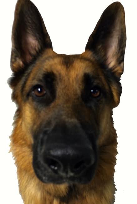 German Shepherd Michigan Dog Training Part 2