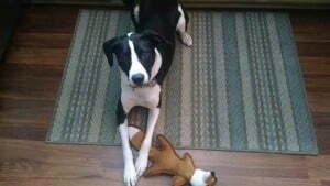 Michigan Dog Training, board and train, dog training, Plymouth, Michigan