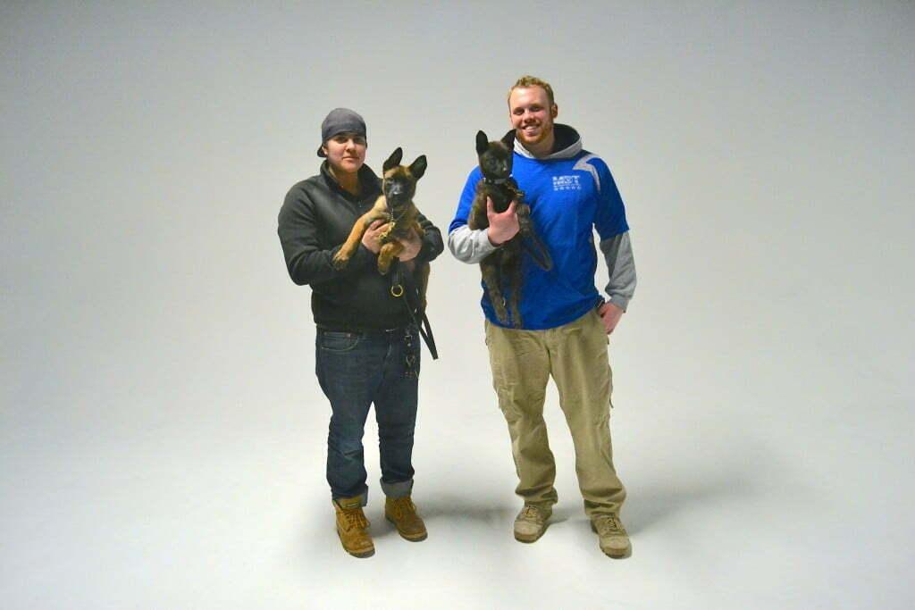 Michigan dog training, Plymouth, Michigan, puppy classes, Dutch Shepherd, Michigan Dog Trainers,Belgian Malinois