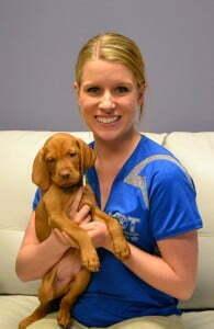 Viktor a Vizsla puppy at Michigan Dog Training