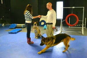 Michigan dog training, plymouth, Michigan, Canine Good Citizen, CGC