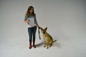 CGC, Canine good Citizen, Michigan Dog Training, Plymouth, Michigan