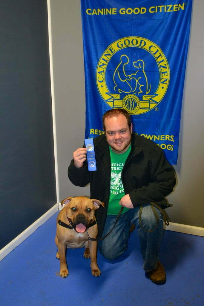 Bullmastiff, Michigan Dog Training, Plymouth, Michigan canine good citizen, cgc, mdt