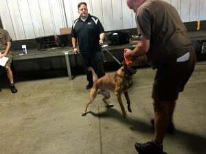dog bite prevention tips, Michael Burkey, Michigan Dog Training, Livonia UPS