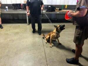 dog bite prevention tips, Michael Burkey, Michigan Dog Training, UPS