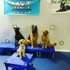 Dog Day Care, Dog School, German Shepherd, Golden Retriever, pup, puppy