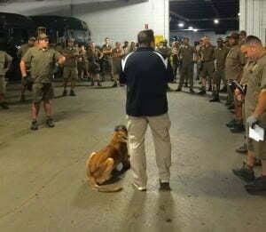 Michigan Dog Training, Michael Burkey, Plymouth, Michigan, Dog Bite Prevention tips