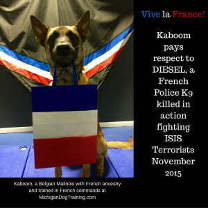 Belgian Malinois, Michigan Dog Training, Police K9, Police Canine, French Police K9, Diesel, Dog fights ISIS, Hero Police Dog Diesel killed by woman suicide bomber in Paris siege