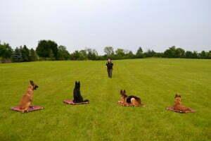Michigan Dog Training, e-collar, off leash dog training