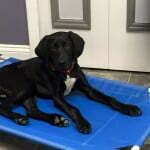 Teach your dog to spin, dog tricks, Michigan Dog Training