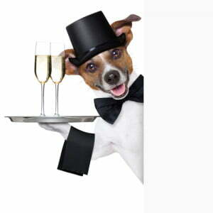 Michigan Dog Training, Jack Russell Terrier, Happy New Year