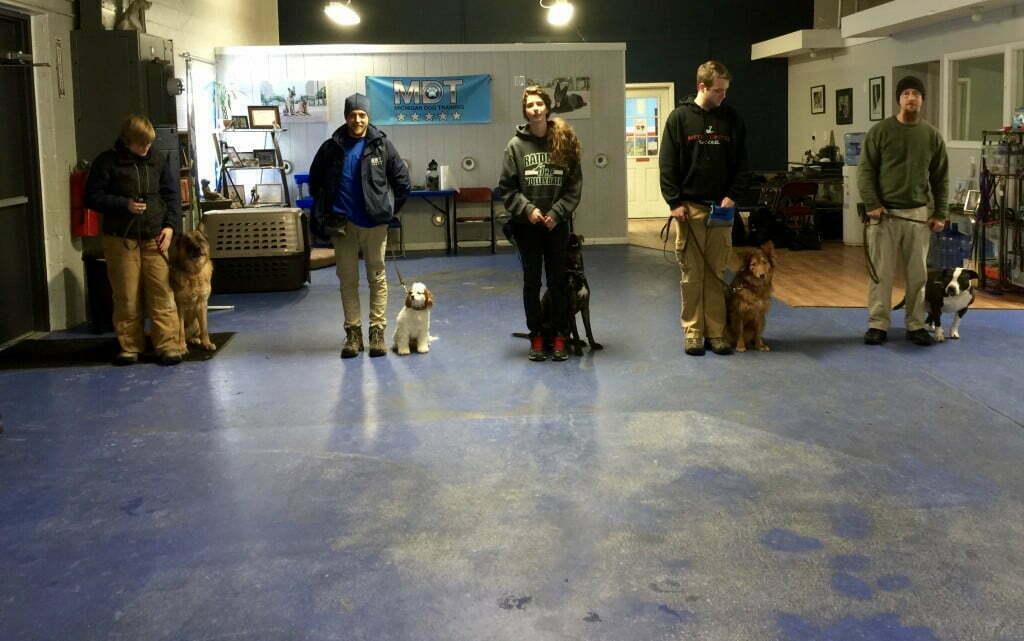 Michigan Dog Training, Michigan Dog Trainers,
