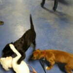 Michigan Dog Training, Puppy S.T.A.R., Puppy obedience group classes, puppy training