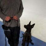 Michigan Dog Training, Canine Good Citizen, CGC