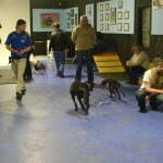 Michigan Dog Training, Plymouth, Michigan, Canine Good Citizen, CGC, Puppy STAR