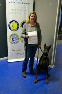 Doberman Pinscher, Canine Good Citizen, CGC, Michigan Dog Training, Plymouth, Michigan, dog training, puppy classes, puppy obedience, obedience, advanced obedience